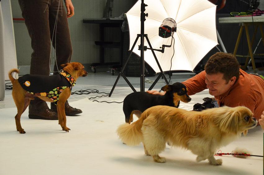 fotografo-animali-ferplast