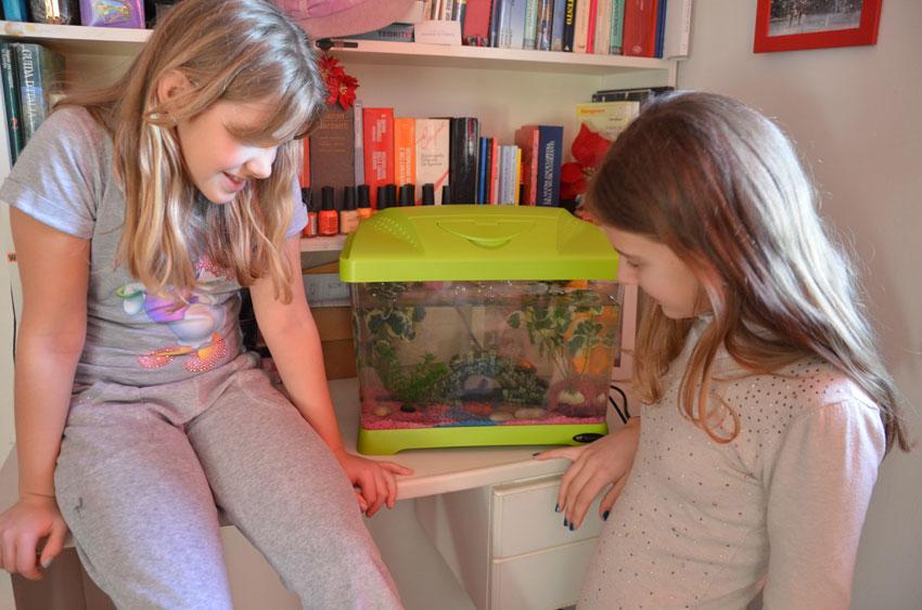 bambini-acquario