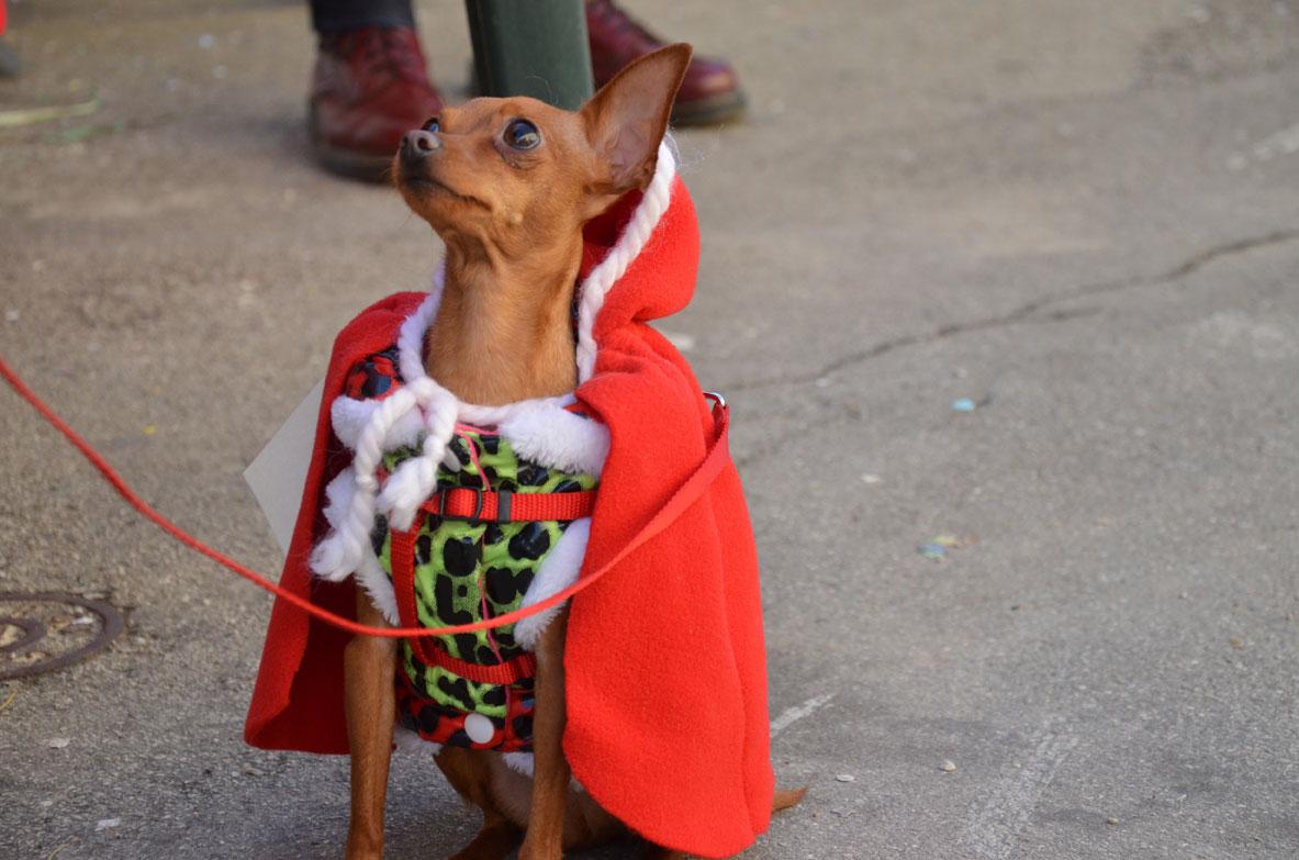 cane-vestito-cappuccetto-rosso