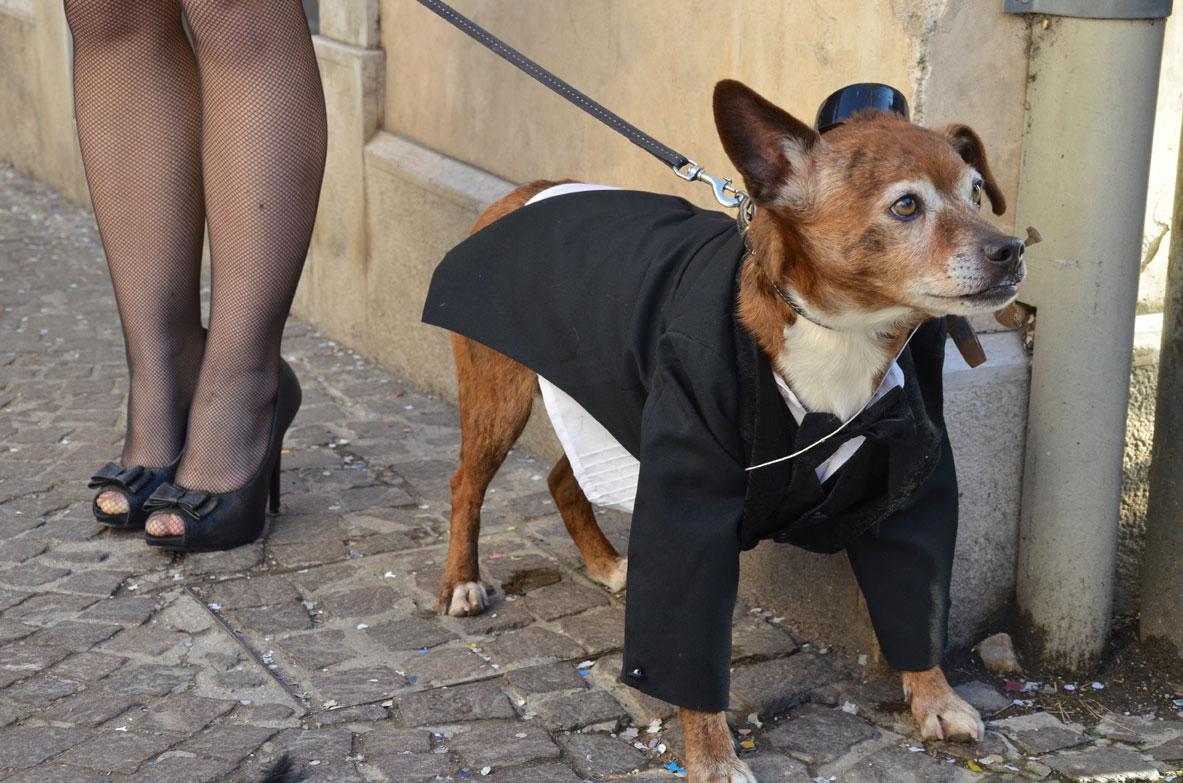 carnevale-cani-vestiti