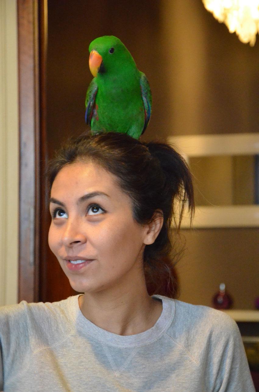 come-educare-pappagallo