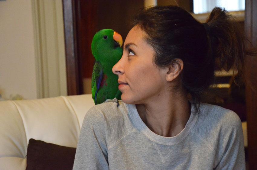 educare-pappagallo