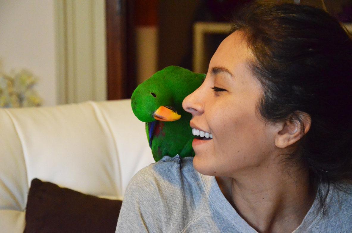 ferplast-gabbia-pappagalli