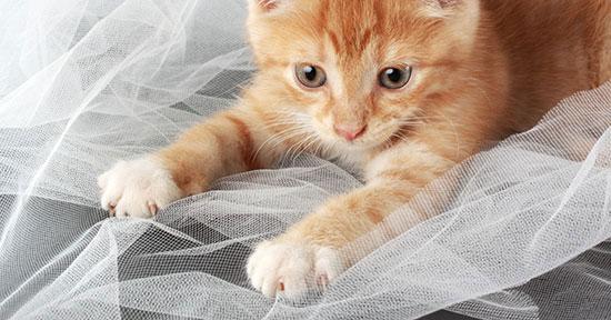 gatto_e_unghie