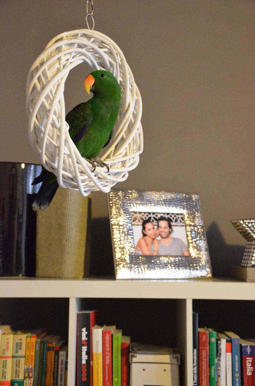 pappagallo-verde-esotico