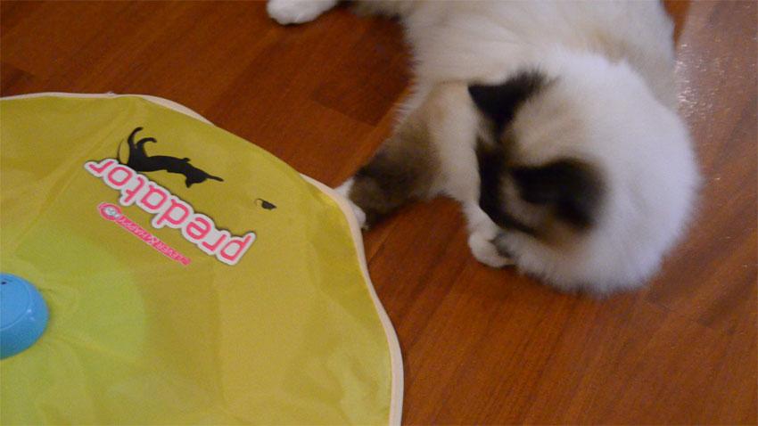 predator-ferplast-cat
