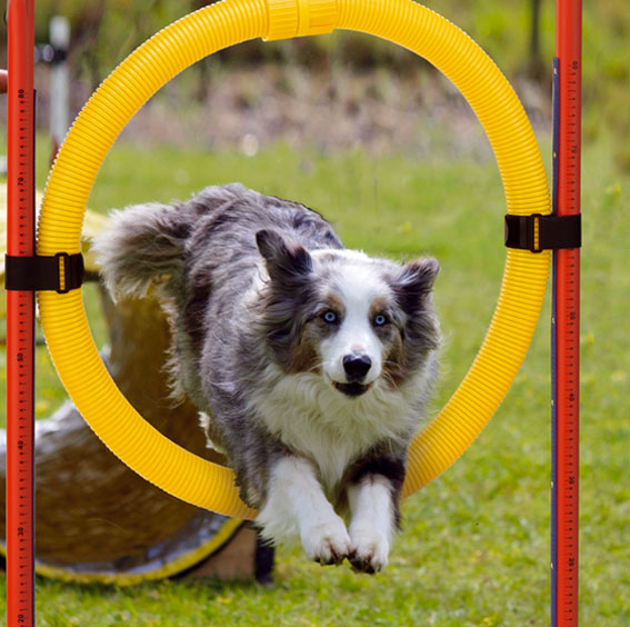cani-agility-dog-vicenza-giochi