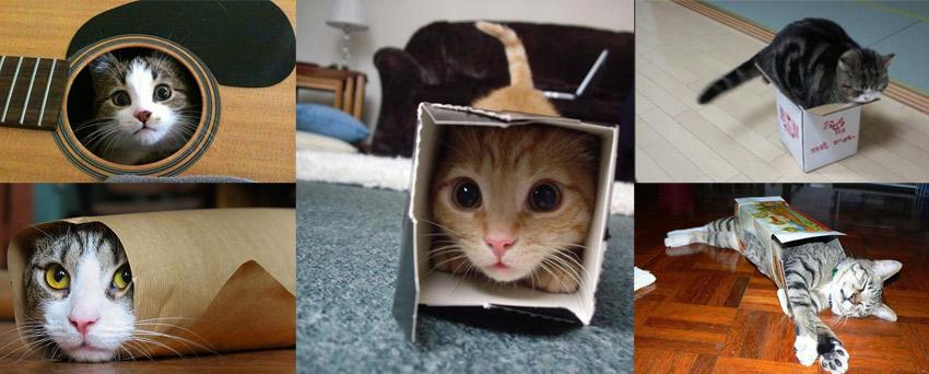 nascondersi-nella-scatola-gatto