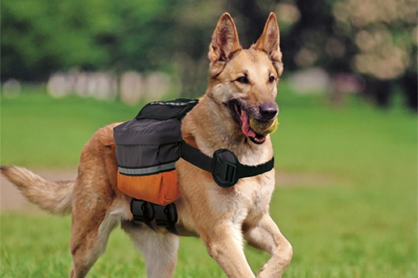 dog-trekking-passeggiata-montagna-dogscout