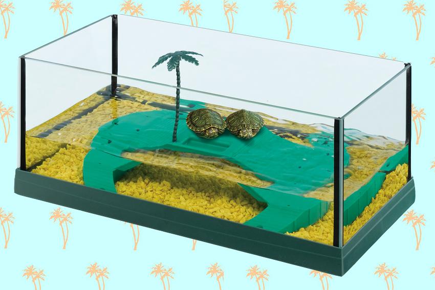 Adottare una tartaruga d acqua love ferplast for Acquario esterno per tartarughe