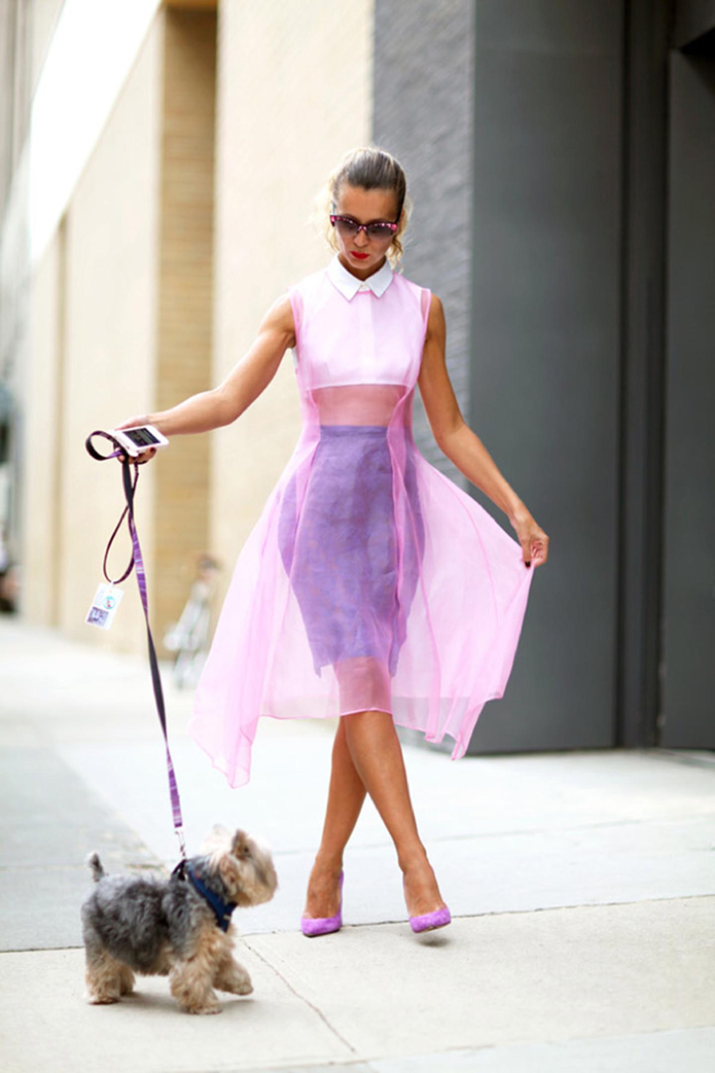 animali-fashion-week-moda-sfilate-cane