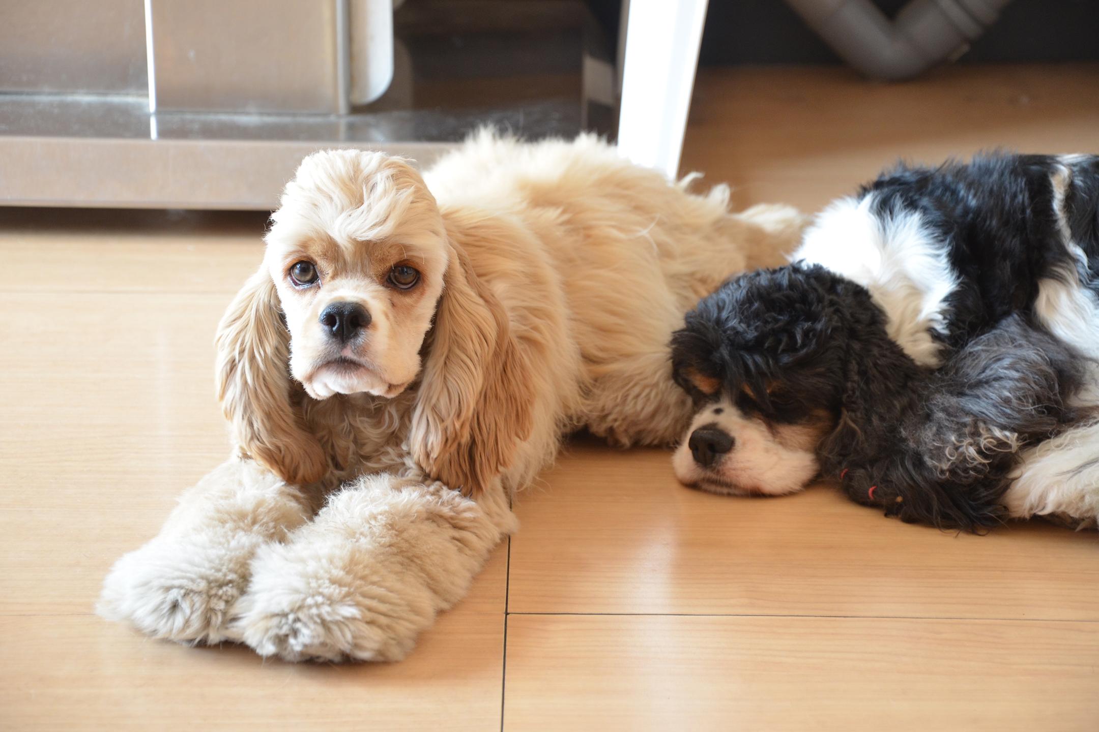 ferplast-toelettatura-silver-dog-cura-cane-pelo-prodotti-spazzole-rientro-dopo-estate-pettine-pelo-cani