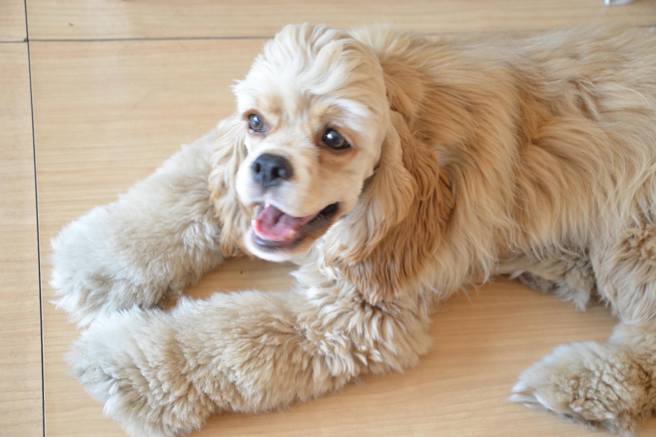 ferplast-toelettatura-silver-dog