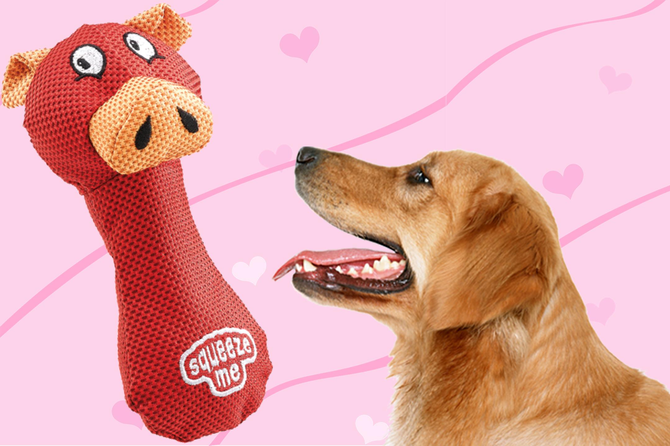 gioco-cani-ferplast-riporto