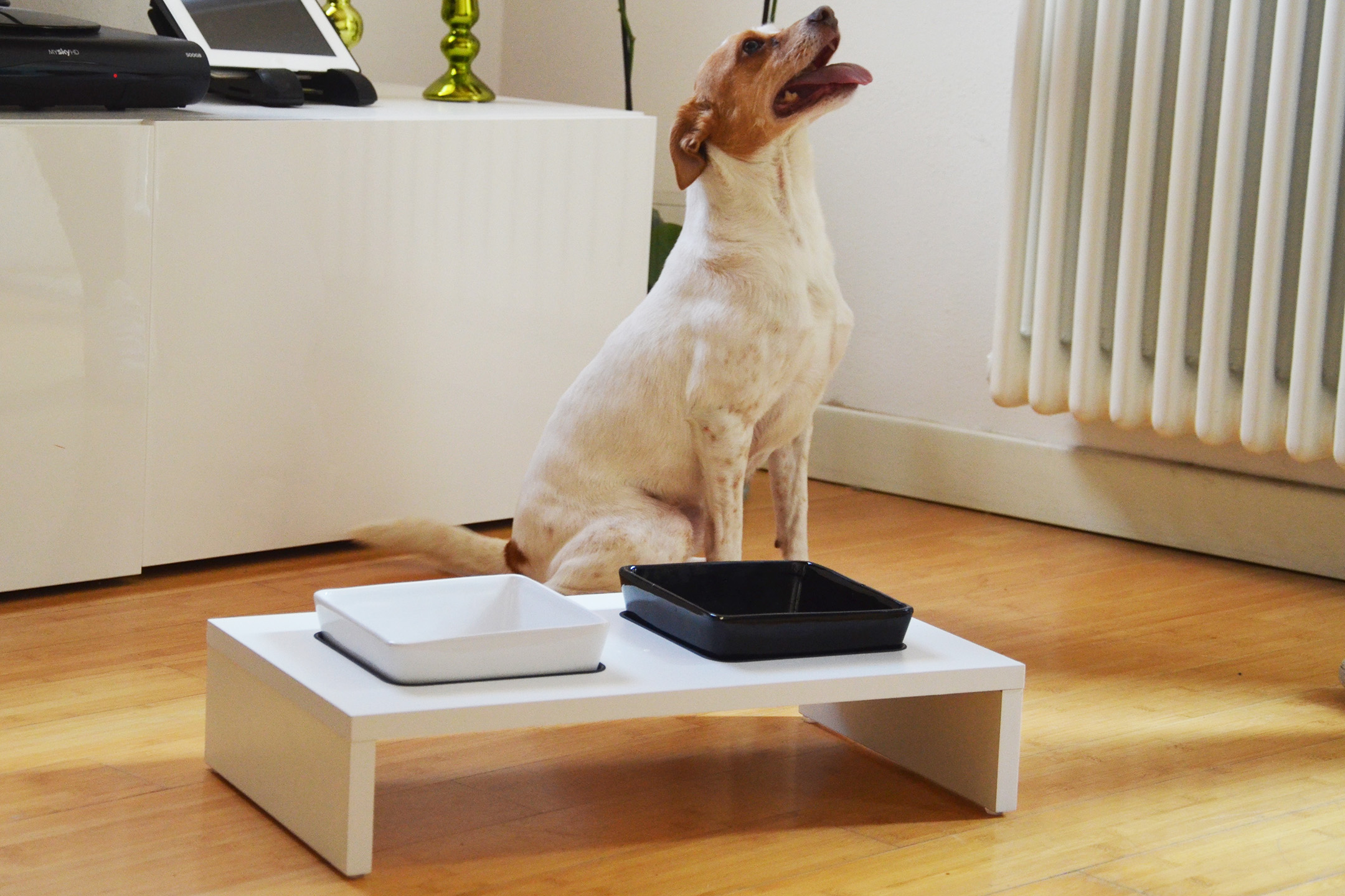 small dog with ferplast maki model dog bowls