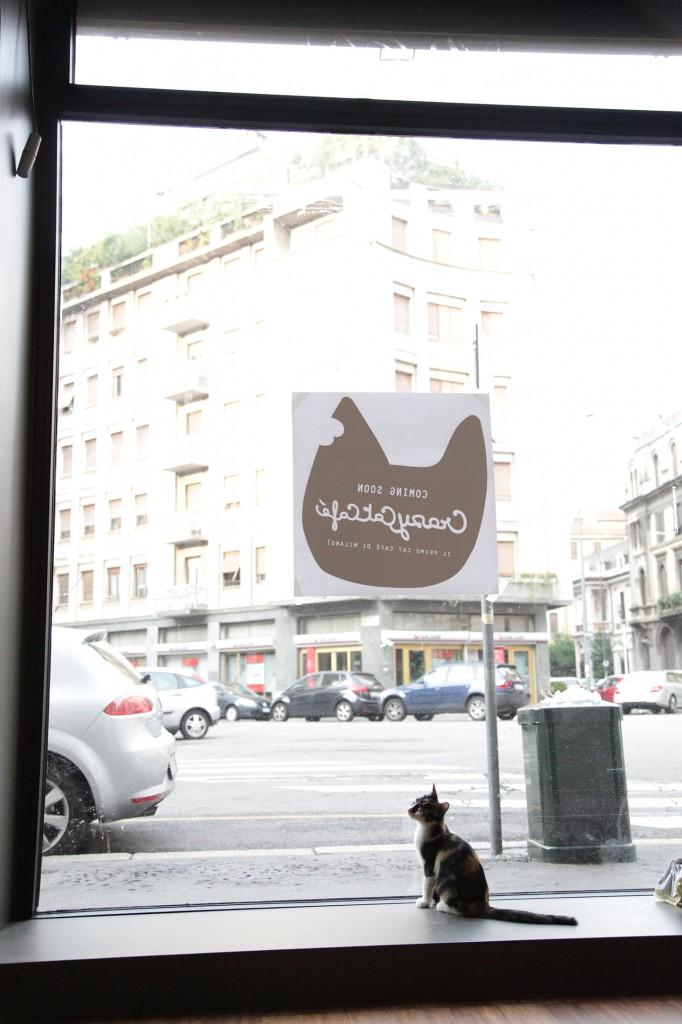 crazy-cat-cafè-milano-ferplast-italia