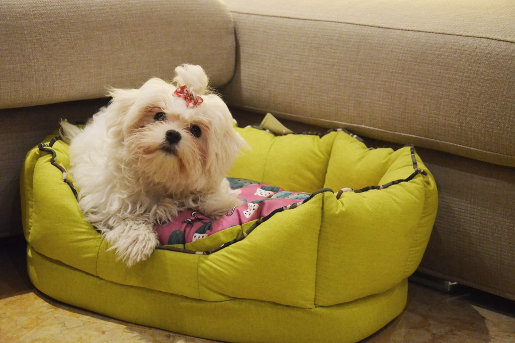 ferplast-blog-cuscino-cane-trilly-cactus-dog-pillow-fiore-winter-collection