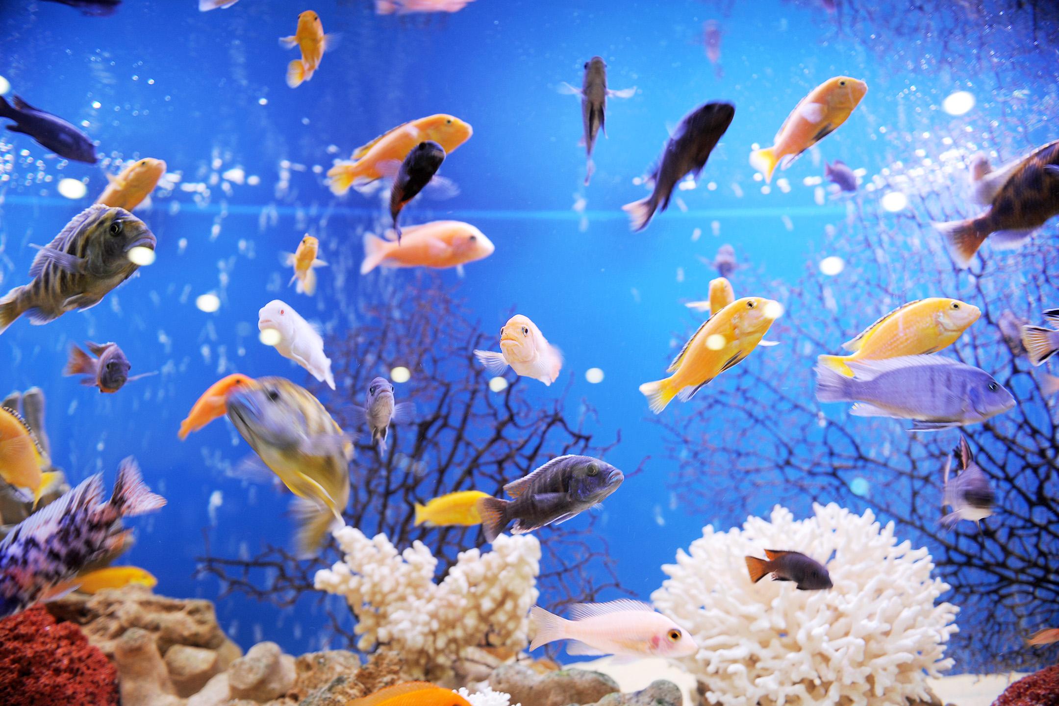 beutiful fishes inside an acquarium