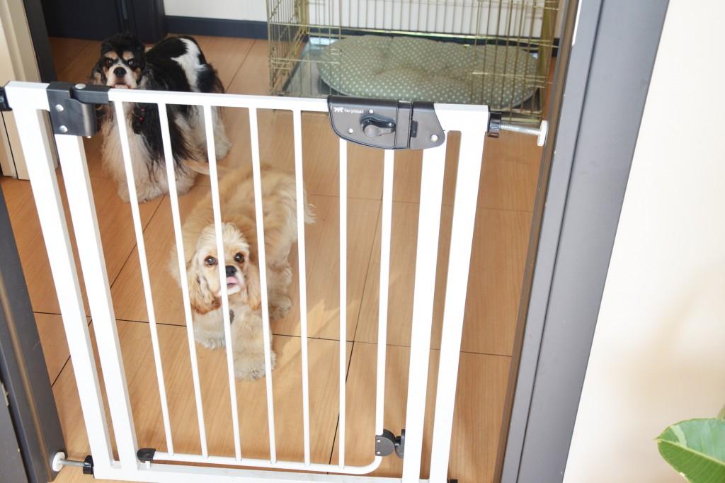 ferplast-cancello-cani-dividere-spazi-casa-dog-gate