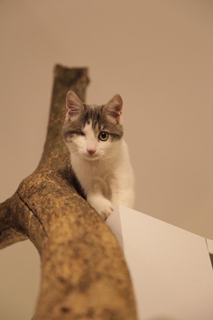 gatti-cat-cafè-ferplast-italia