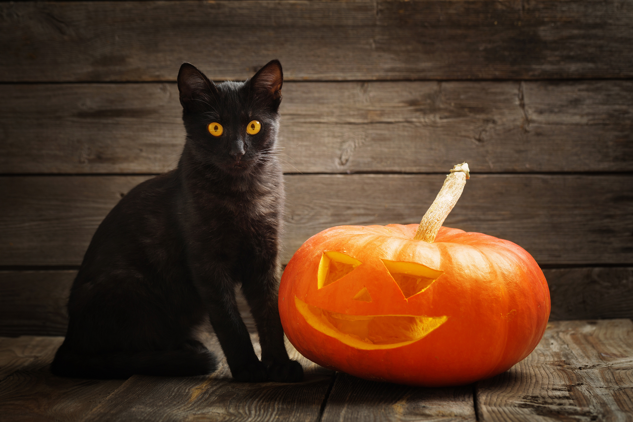 HALLOWEEN IS UPON US, PROTECTING THE BLACK CAT - LOVE FERPLAST