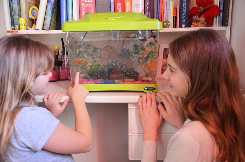 Подарите аквариум на рождество