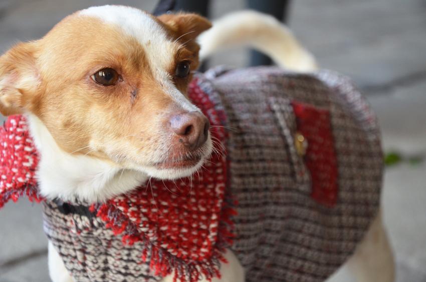 bau-bau-moda-ferplast-dog-coat