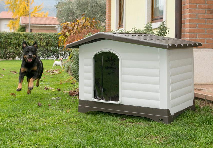 proteggere il cane dal freddo cuccia in plastica Dogvilla di Ferplast con cani che giocano Jack Russell e Rottweiler