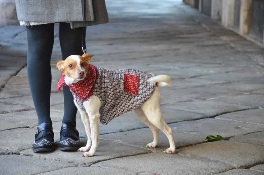 capopottino-inverno-cane