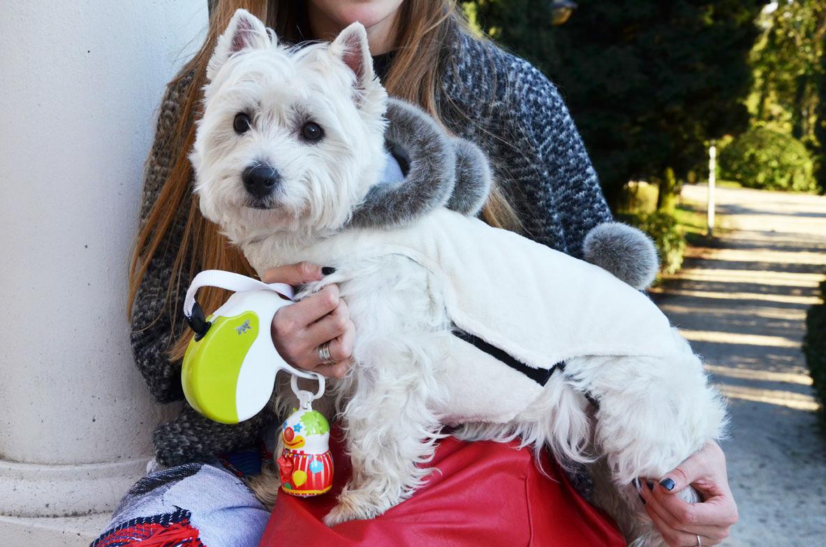 Как снять мерки с собаки для покупки одежды