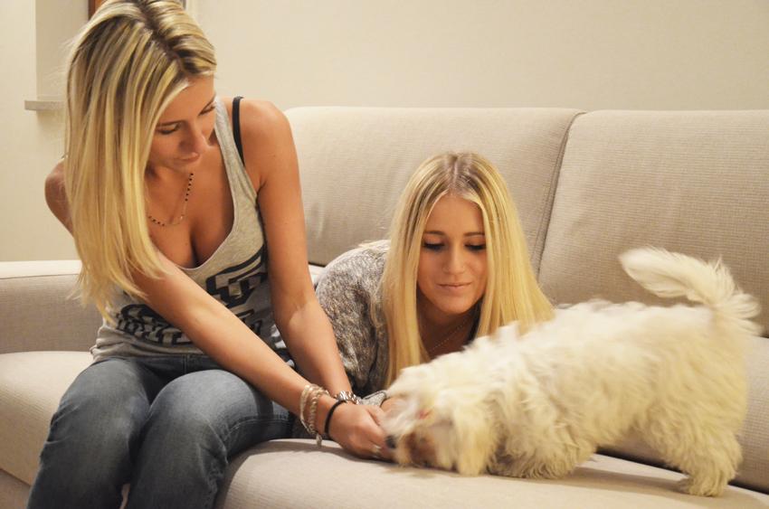 comprare-cane-migliora-rapporto-famiglia