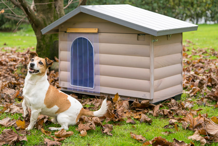 how to protect dog from cold Jack Russell dog in front of Ferplast outdoor wooden kennel Canada