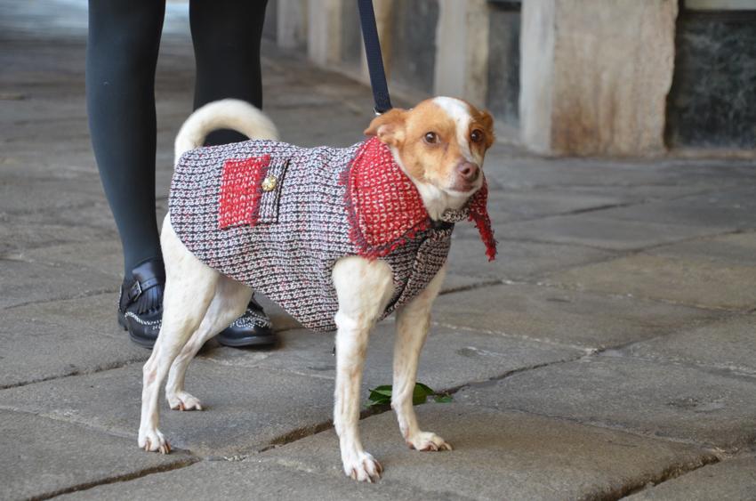 dog-coat-ferplast