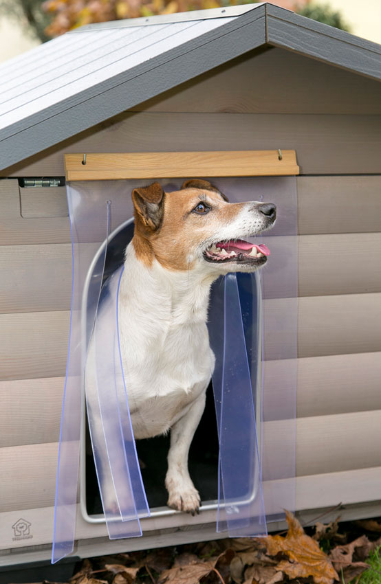 Protect dog from the cold close up on a Jack Russell dog inside Canada wooden kennel by Ferplast