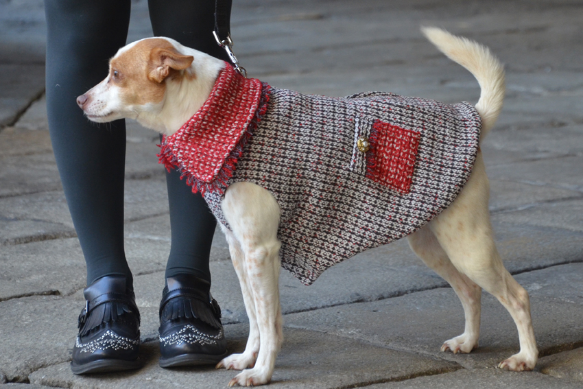 fashion-dog-coat