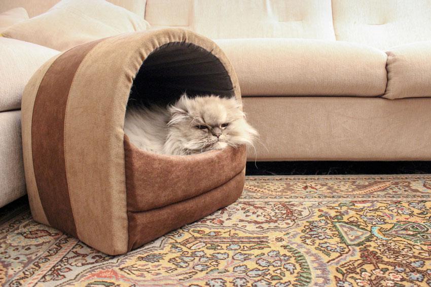 gatto Persiano Chinchillà che dorme in una cuccia dalla forma a igloo per gatti
