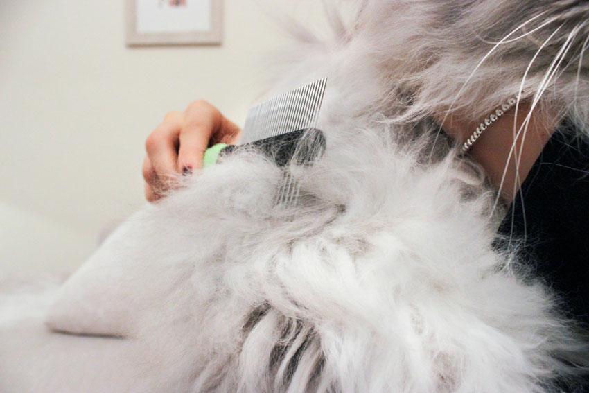 pettine doppio per grooming o cura del manto del gatto