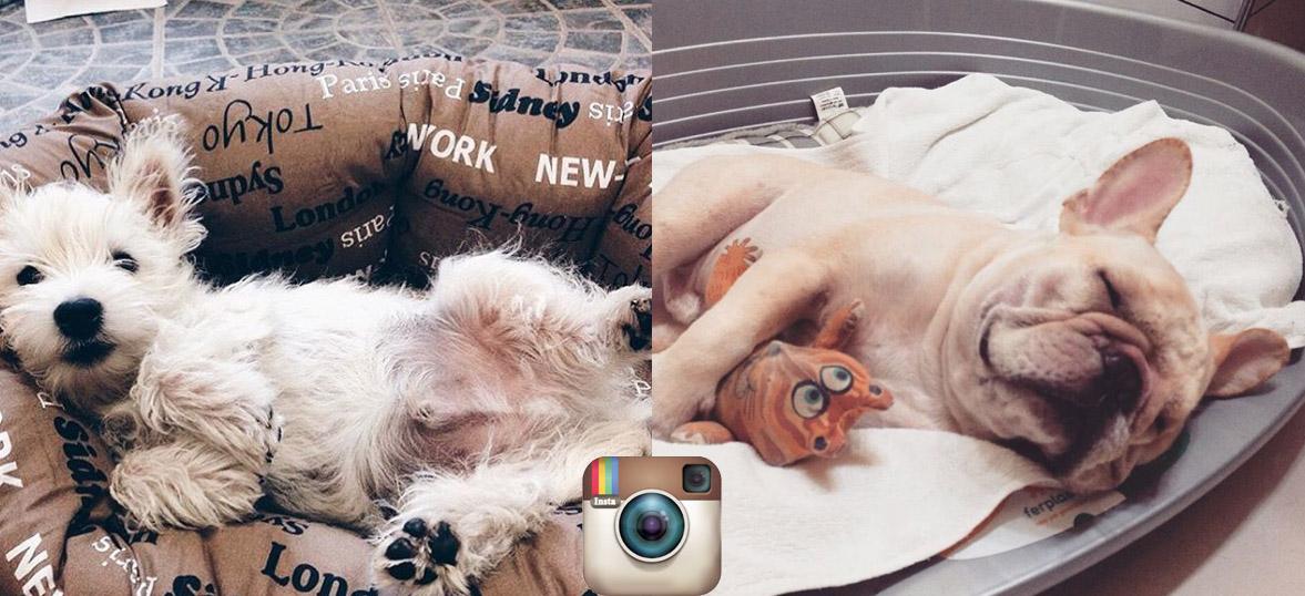 Каждому свою собственную кровать Instagram Ferplast