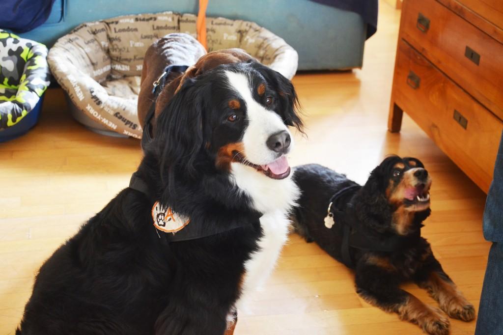 pet-therapy-ferplast-blog-associazione-aurea-guarire-con-animali