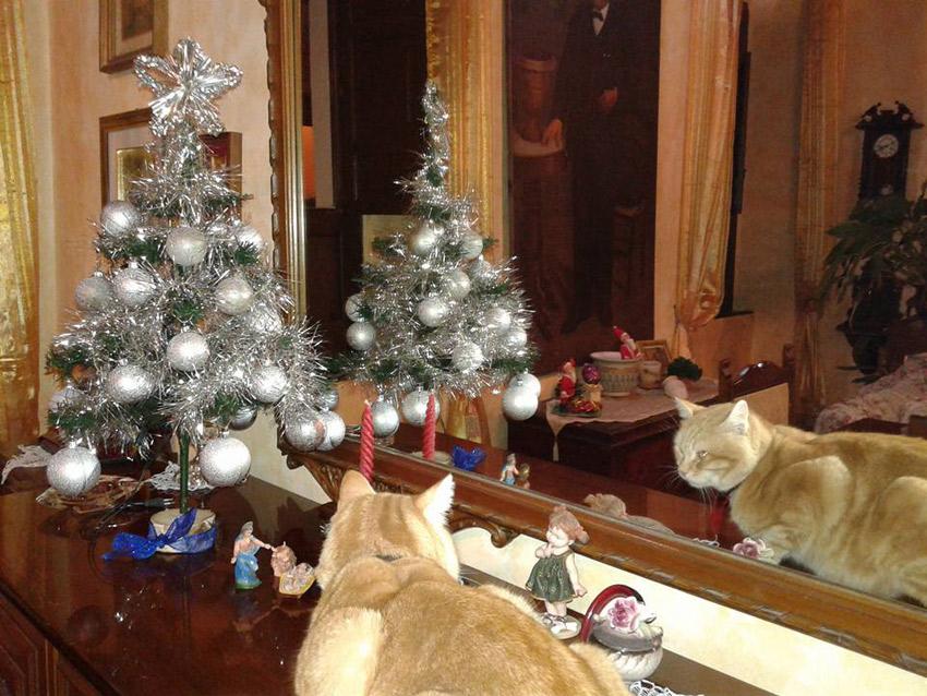 gatos e decoração para Natal