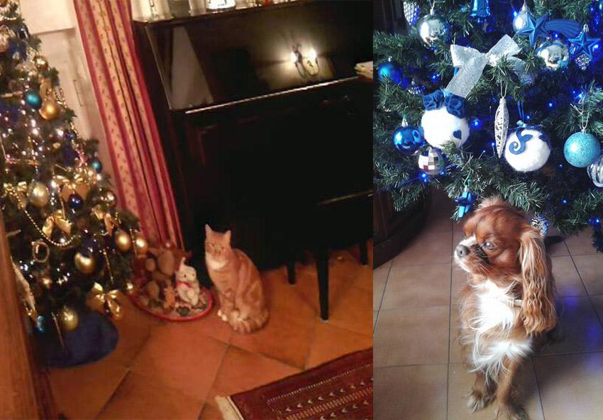 o gato e o árvore de Natal