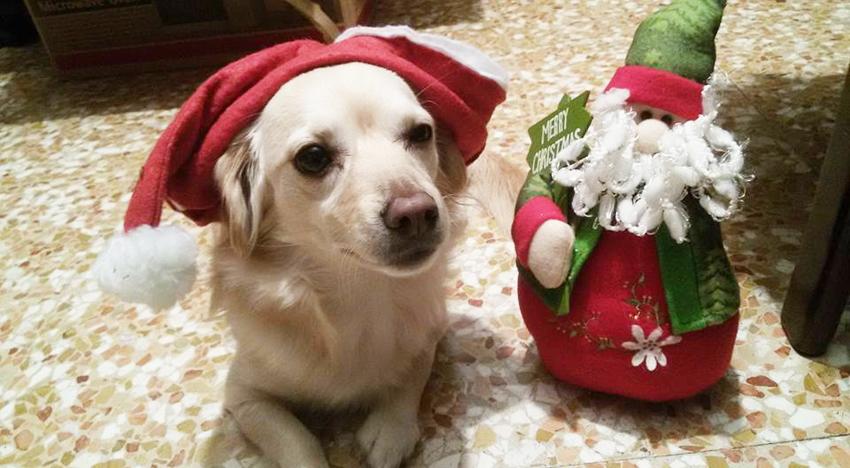 natal dos cães