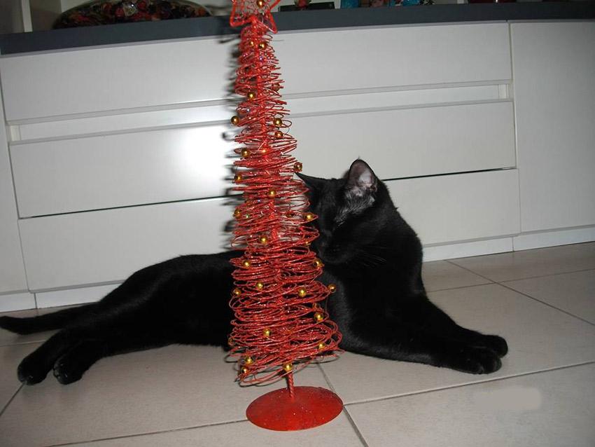 gatos e árvore de Natal