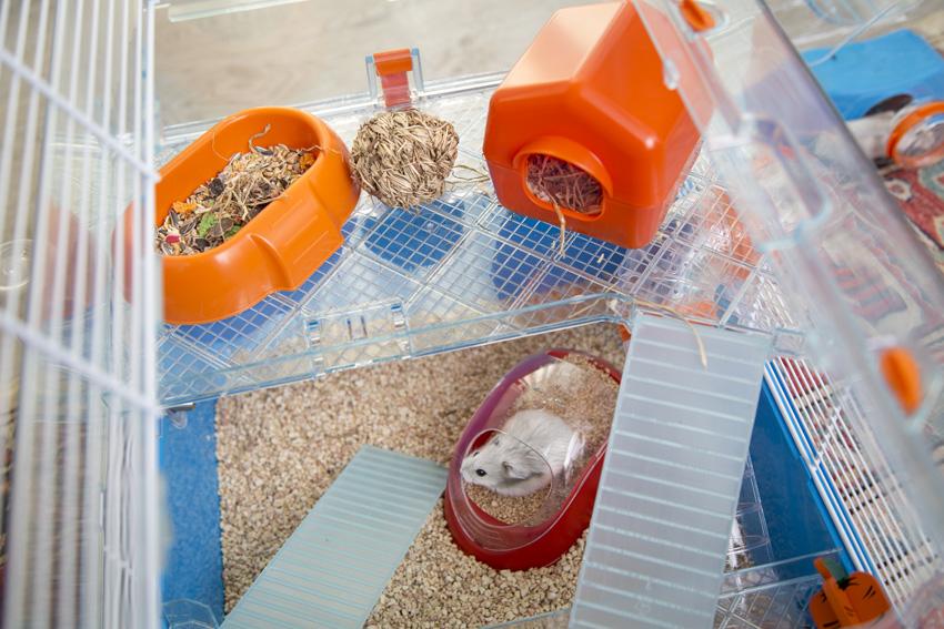 interno gabbia per criceti con casetta mangiatoia e lettiera Koky di ferplast