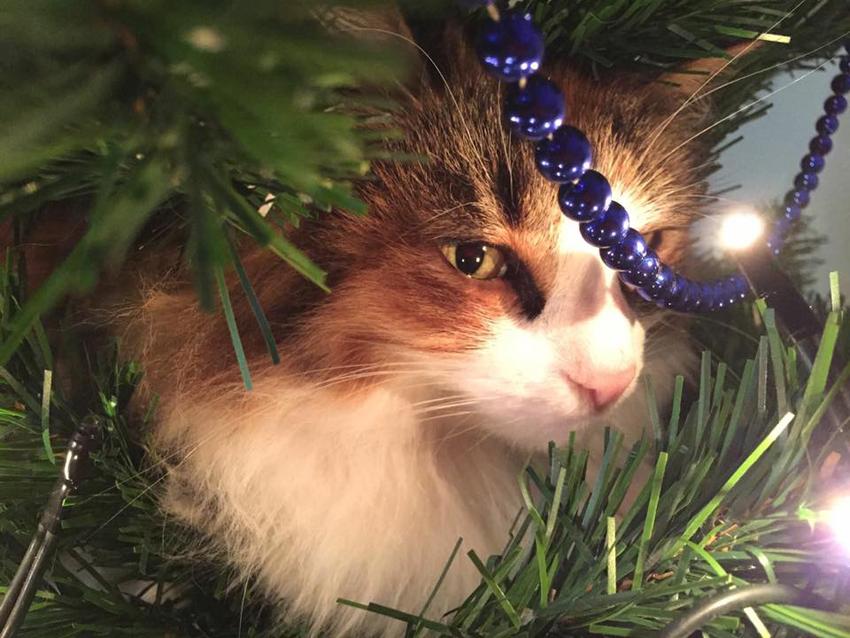 gato e decoração para Natal