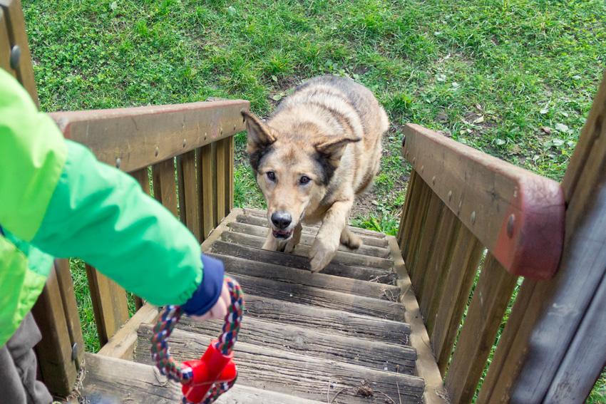 cane che gioca al parco giochi con il suo padroncino