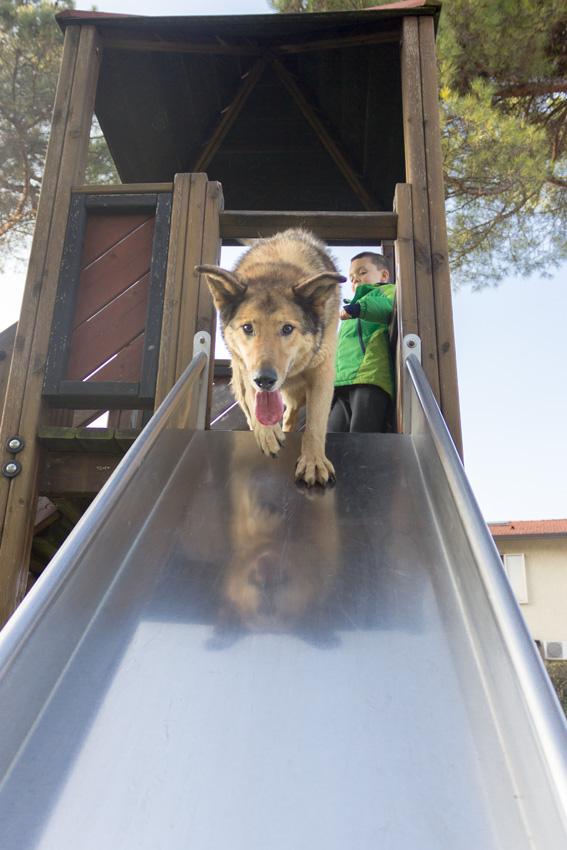 cane che gioca con bambino al parco giochi sullo scivolo