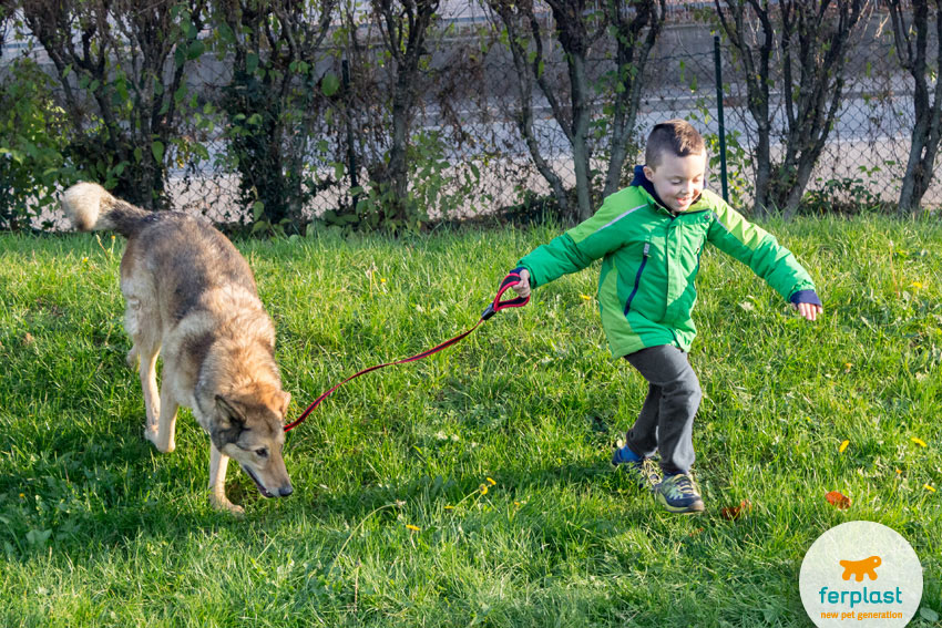 little child running happily with his shepherd dog  on a meadow