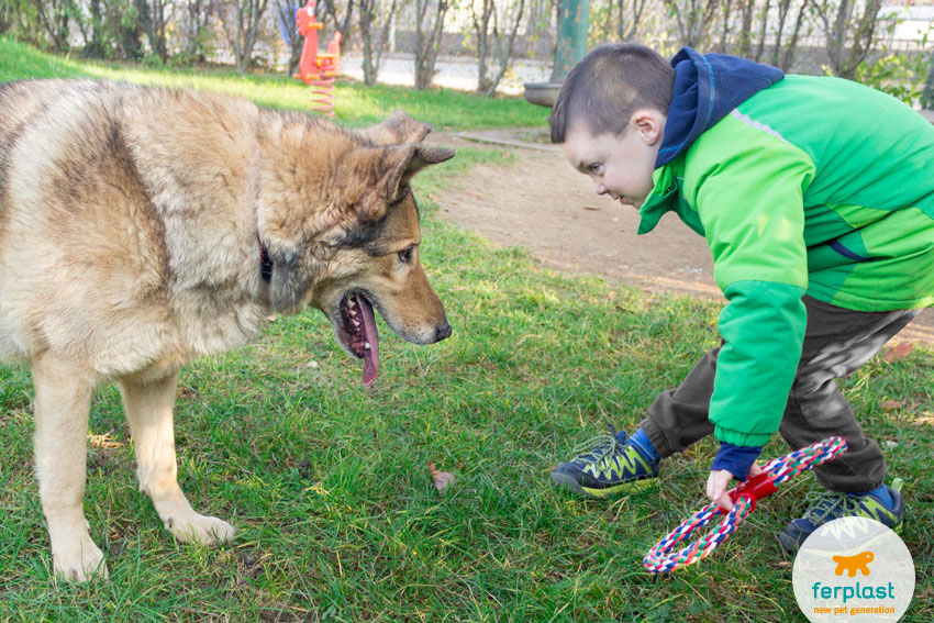 little child playing happily with his shepherd dog in a recreation ground