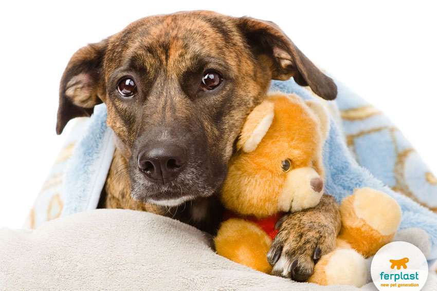 scared dog under a blanket with a plush toy
